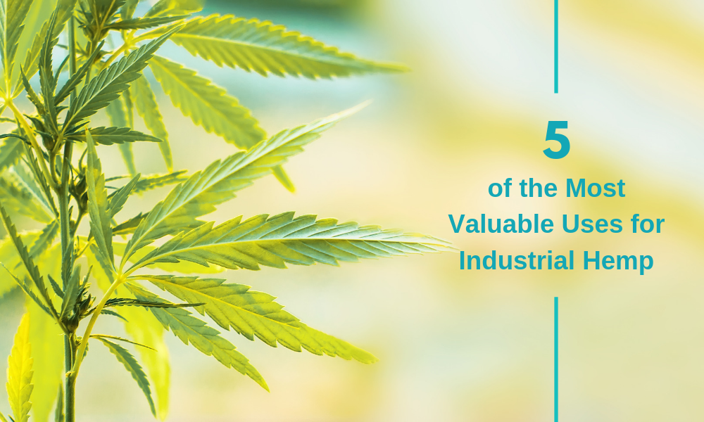 5 of the most valuable uses of industrial hemp